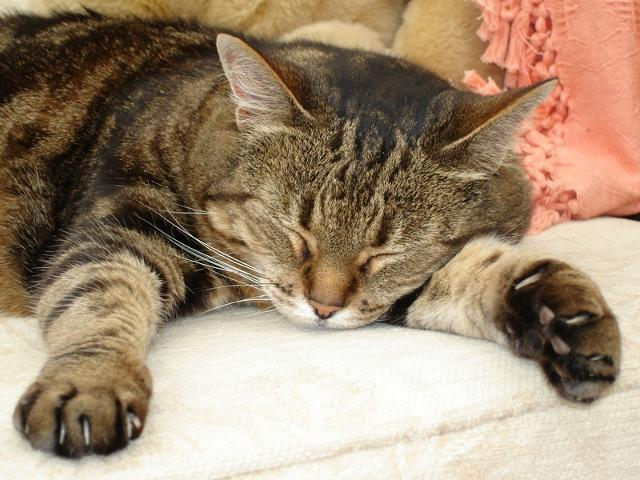 macska fogyás fokozott étvágyat)